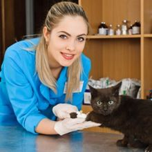 Ask a Vet: Let's Talk About the Latest on Injection-Site Sarcomas in Cats