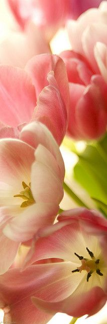 Tulips_Bookmark by Chiaralily