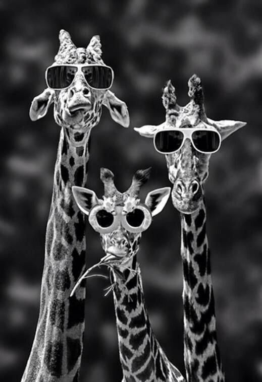 Stylish Giraffe Family ...