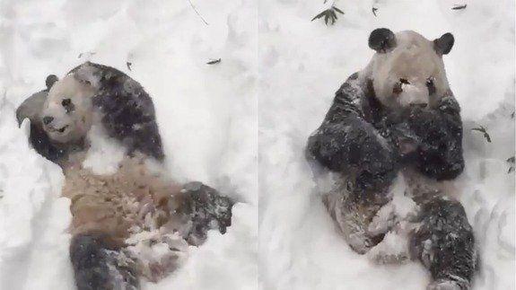Tian-tian-panda-snow