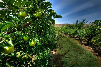 Orchards, Vernon, BC, Canada