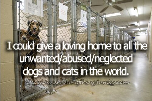 If I could wish for anything… I would wish I could give a loving home to all the unwanted/abused/neglected animals in the world.