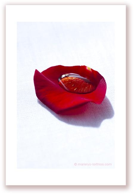 """Dessert de Saint-Valentin : Pétales de rose, miel gingembre, très facile et impertinent.... #photographe #culinaire merci por le """"re-pin"""" #marielyslorthios"""