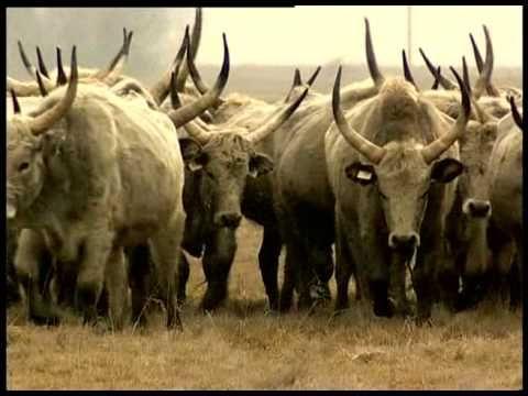Magyarország nemzeti parkjai - Dunán innen /teljes film/ - YouTube