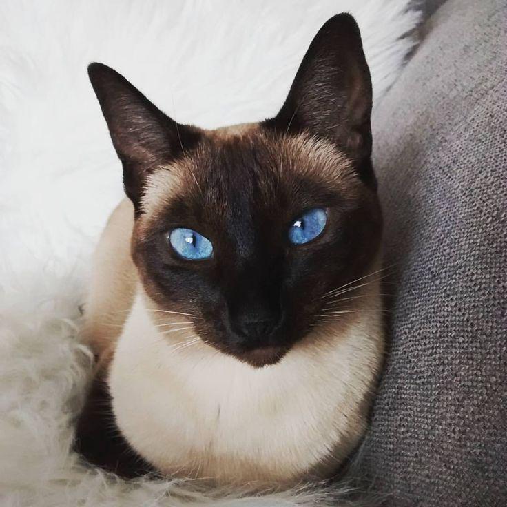Bleu... Eyes in the sky