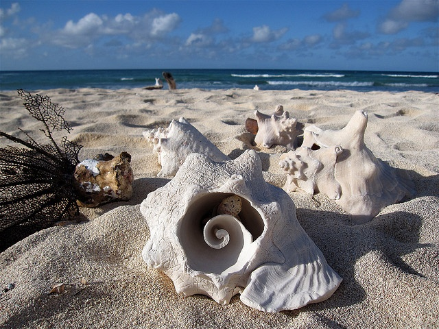 """❂ """"One cannot collect all the beautiful shells on the beach. One can only collect a few. One moon shell is more impressive than three. There is only one moon in the sky."""" I Anne Morrow Lindbergh, Gift from the Sea"""