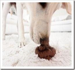 Coprofagia canina: Onde foi que eu errei?