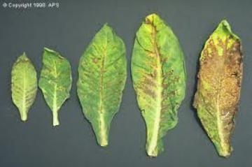 Προβλήματα Φυτών: αίτια και αντιμετώπιση