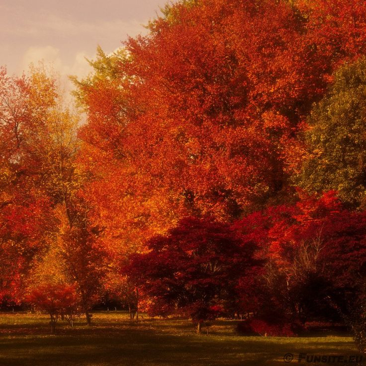 Autumn colors 2015 #2 by Gerhard Hoogterp