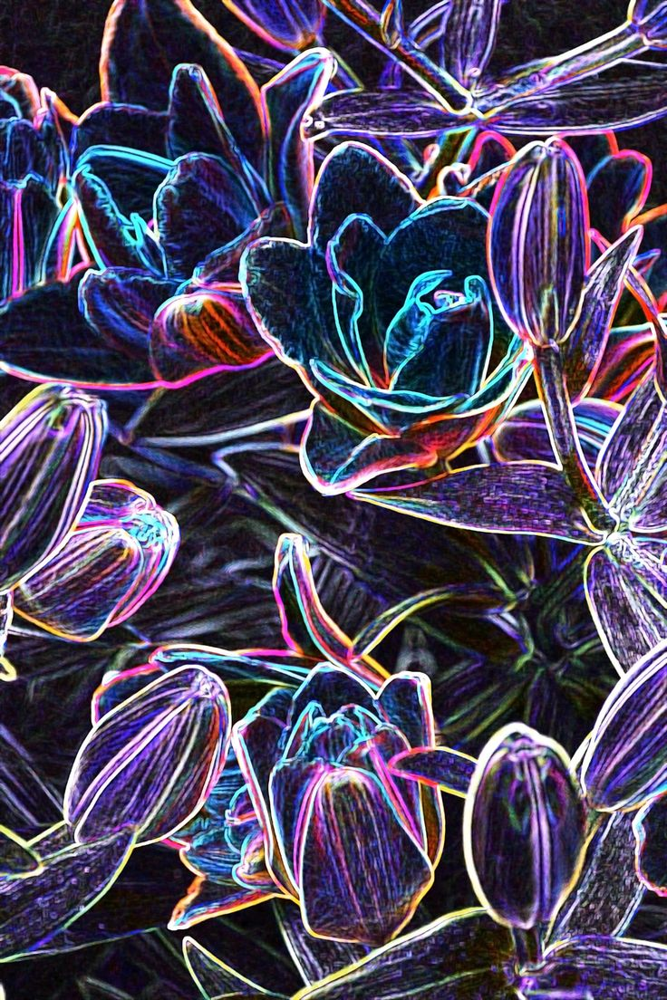 Neon flower by Tine Nordbred on 500pxPhoto of Lilies edited into a very colorful neon-like expression on black background #abstract #art #artistic #colorful #creative #digital art #edited #flowers #lilies #lily #neon #neon ligth #purple flowers #blue flowers #digital paint #lili #neon color #neon flowers