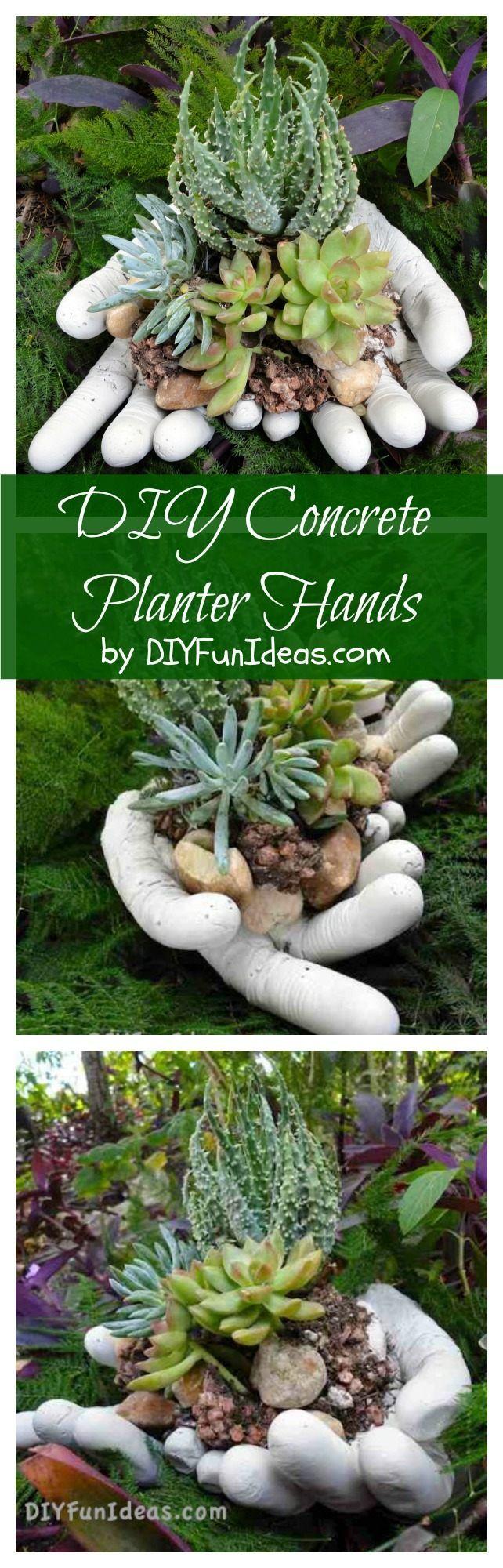 DIY suculentas concretas mãos plantador