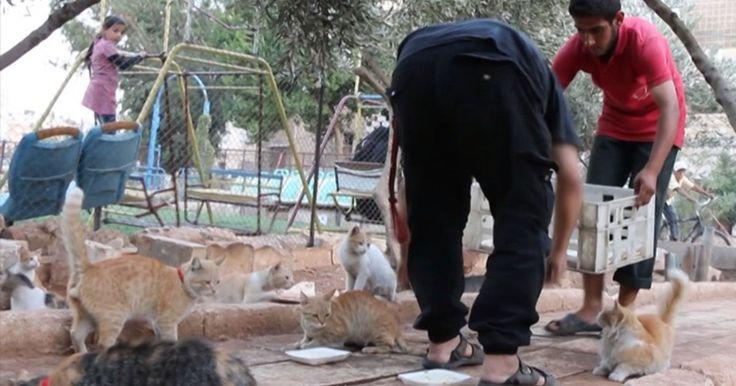 O protetor dos gatos abandonados na Síria em guerra