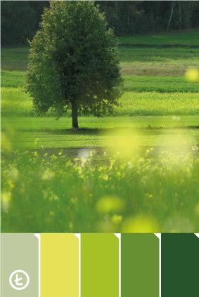 Park Krajobrazowy Wzniesień Łódzkich #colours #palette #green
