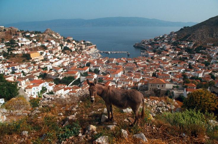 Donkey overlooking Hydra Town, Hydra Greece