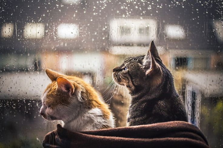 I Photograph My Cats In Front Of The Window Whenever It's Raining | Bored Panda