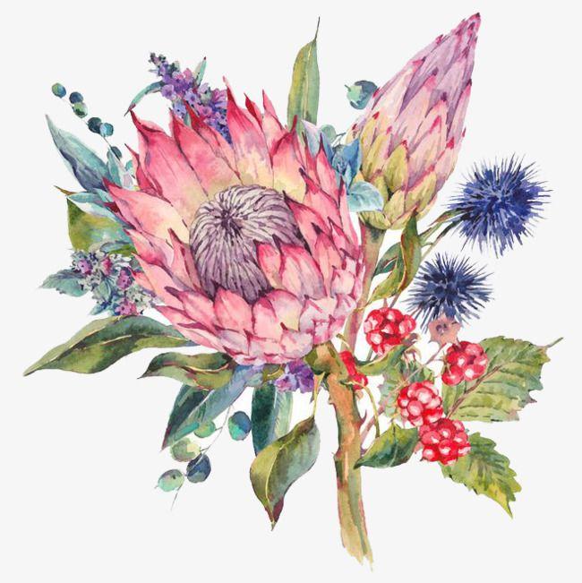 Imagen Relacionada Protea Art Watercolor Flowers Floral Drawing
