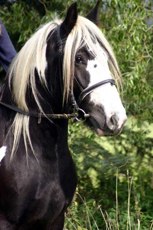 Riverfield Irish Horse