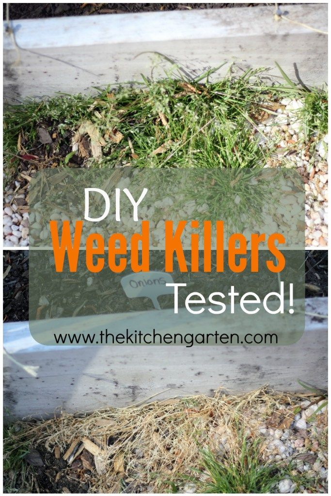 Best 25 Weed Killers Ideas On Pinterest Homemade Weed