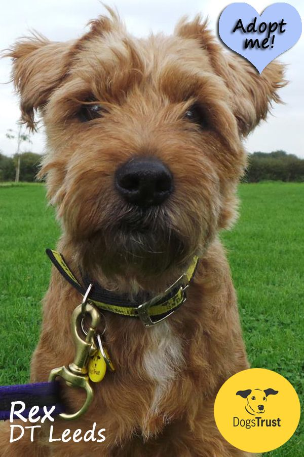 Rex is a cute little fellow looking for a quiet adult only home. He is friendly with both people and dogs and may live with another calm dog for company. Rex may take time to settle into a new home and potential owners will need to take advice from our behaviourist before meeting Rex.