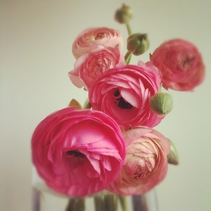 pretty flowers: Pink Flowers, Bright Pink, Peonies Roses, Beautiful Flowers, Bloom, Pretty Flowers Pink, Colorful Roses, Favorite Flower
