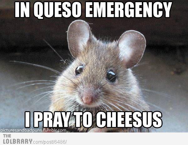Raton en espanol, Professing his love to the cheese gods.....mmmm mmmm cheese :)
