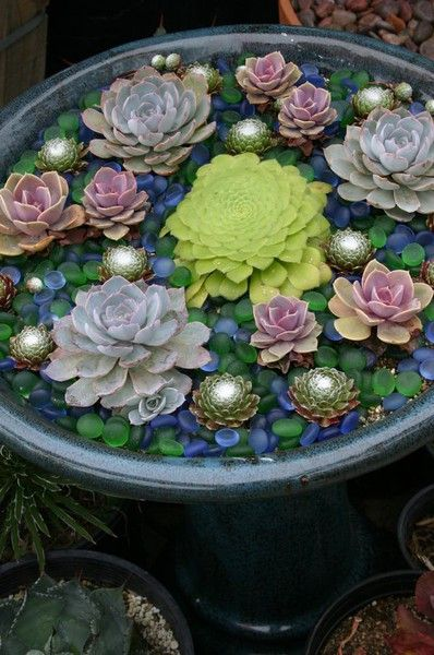 """succulents in blue and green glass pebbles in a blue-glazed birdbath - """"Purple and pink echeveria suggest water lilies. White-webbed Sempervivum arachnoideum rosettes sparkle like sunlight on the surface of water, and in their midst is a flat green Aeonium tabuliforme (lily pad aeonium). A topdressing of green and blue florist's marbles enhances the illusion."""""""