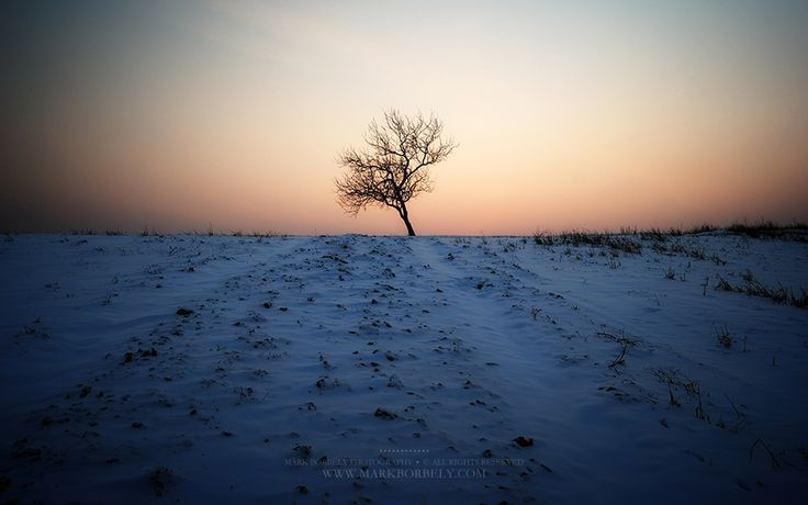 Solitude by Márk Borbély