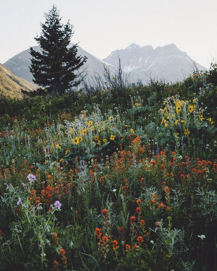 Wildblumenfeld in den Bergen – #Feld #Berge #Wildblumen