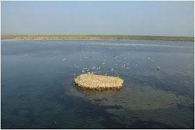 Kuş gözlemciliği için, Büyükçekmece Gölü çevresinde, göl başta olmak üzere, su kuşları ile önemli kuş alanı statüsüne sahiptir. #Maximiles #spor #extreme #sporlar #adrenalin #tehlike