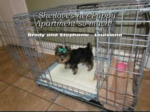Puppy Apartment Reviews. Click here to watch our world-famous potty training video: ModernPuppies.com