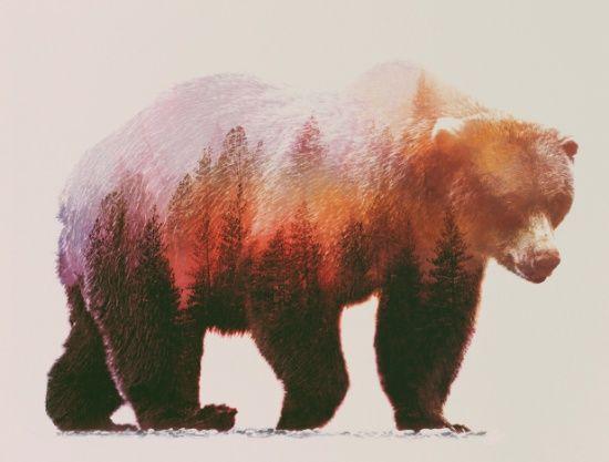 Brown Bear Art Print