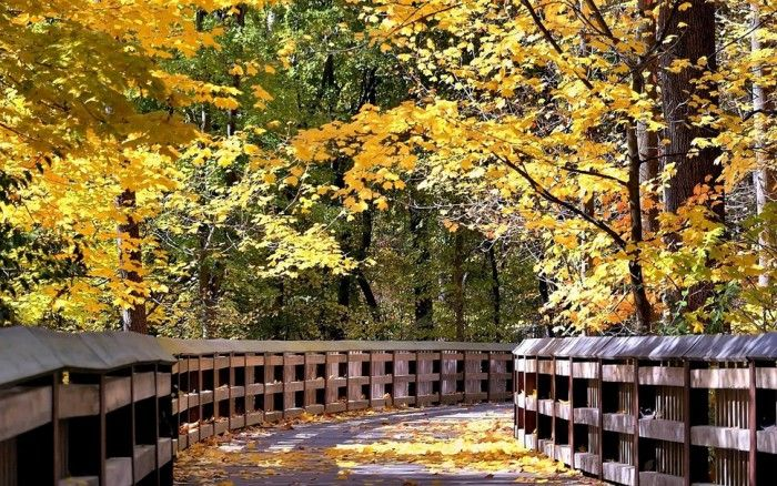 осень фото -7-10