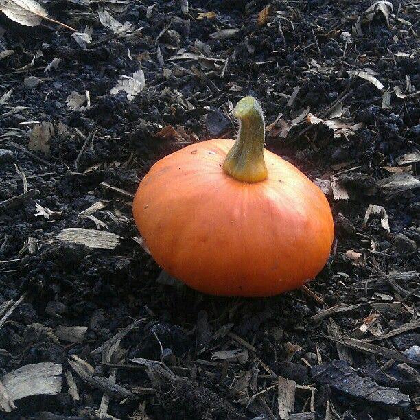 Photo by broadbeanz pumpkin