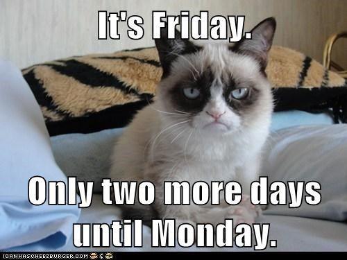Funny Friday Meme Tumblr : Happy friday from grumpy cat cats funny