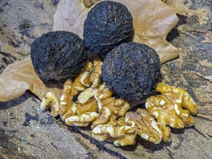 7 Amazing Black Walnut Benefits | Healthy Food Style