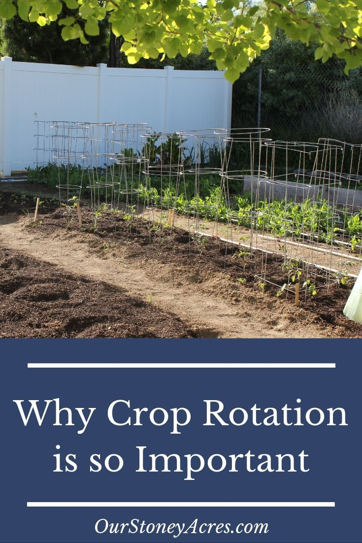 The Importance Of Crop Rotation In The Home Garden Our Stoney Acres Crop Rotation Backyard Vegetable Gardens Fall Garden Vegetables Backyard garden crop rotation