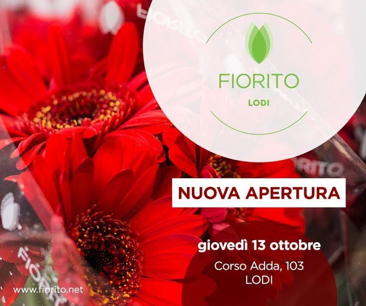 Manca una settimana!! Riuscite ad aspettare?!?! #Lodi #Fiorito #fiori #bouquet