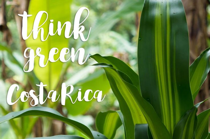 Think #green #Costa Rica. A design from De la Pura Vida and Evergreen Design Studio :)