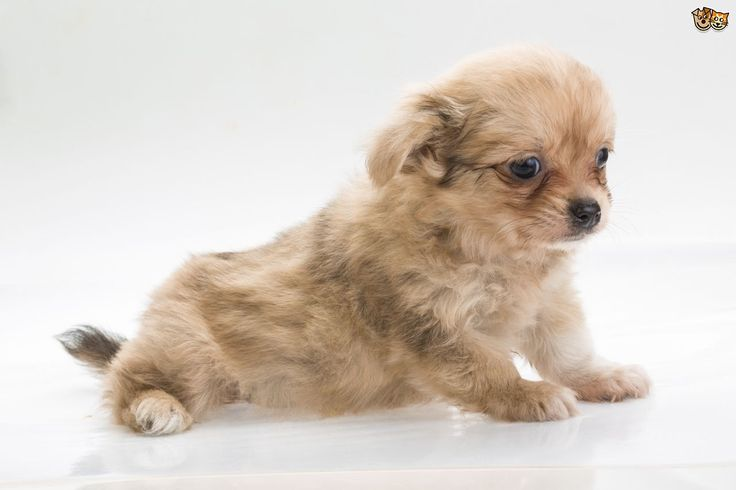 10 of the most popular small dog breeds within the UK | Pets4Homes