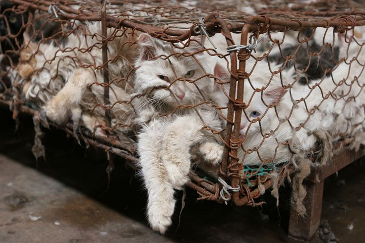 Nobody touch the Cat--we are shocked to see how the Cats are treated and killed in China. Pls sign and share widely!!