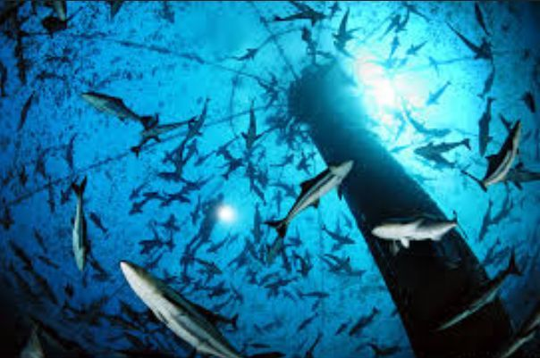 Oceanic seafood business development, http://yook3.com, key players, investors, development, Caribbean, Colombia, Wilfried Ellmer