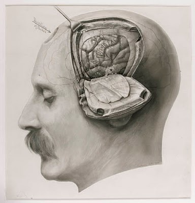 : Medical Illustrations, Drawings, Harvey Cushing, Anatomy, Art, Book, The Brain, Scientific Illustrations, Old Photos