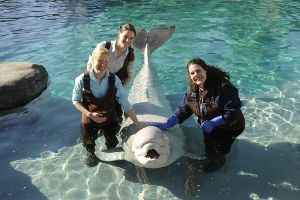 An animal encounter program. Pictured here is the Beluga Whale Encounter at the Mystic Aquarium. $150 for non-members
