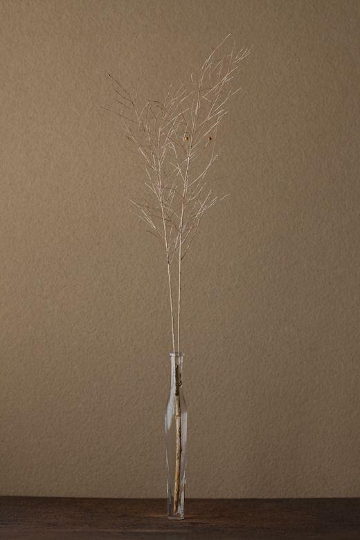 2012年3月6日(火)ふたつだけ残った実が、眼のようです。アスパラガスの一種。 花=アブライト 器=古ガラス細瓶(20世紀)