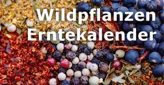Wildpflanzen Erntekalender: Kräuter, Bäume, Obst & mehr