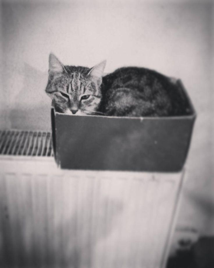 """54 aprecieri, 1 comentarii - Floraria Dorothy's (@florariadorothys) pe Instagram: """"Winter is coming... #grigore #in #box #catintheflowershop #clujcats #napocats #catsofcluj #cluj…"""""""