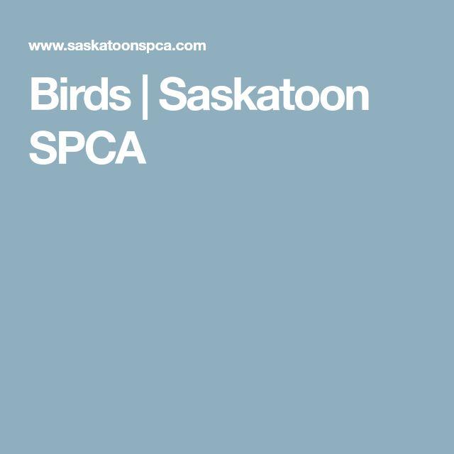 Birds | Saskatoon SPCA #parrot #petbirds #companionparrot #birdclub