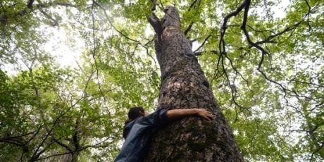 Avaaz - Comité international olympique: halte à la destruction de cette ancienne forêt - Corée du Sud - septembre 2015
