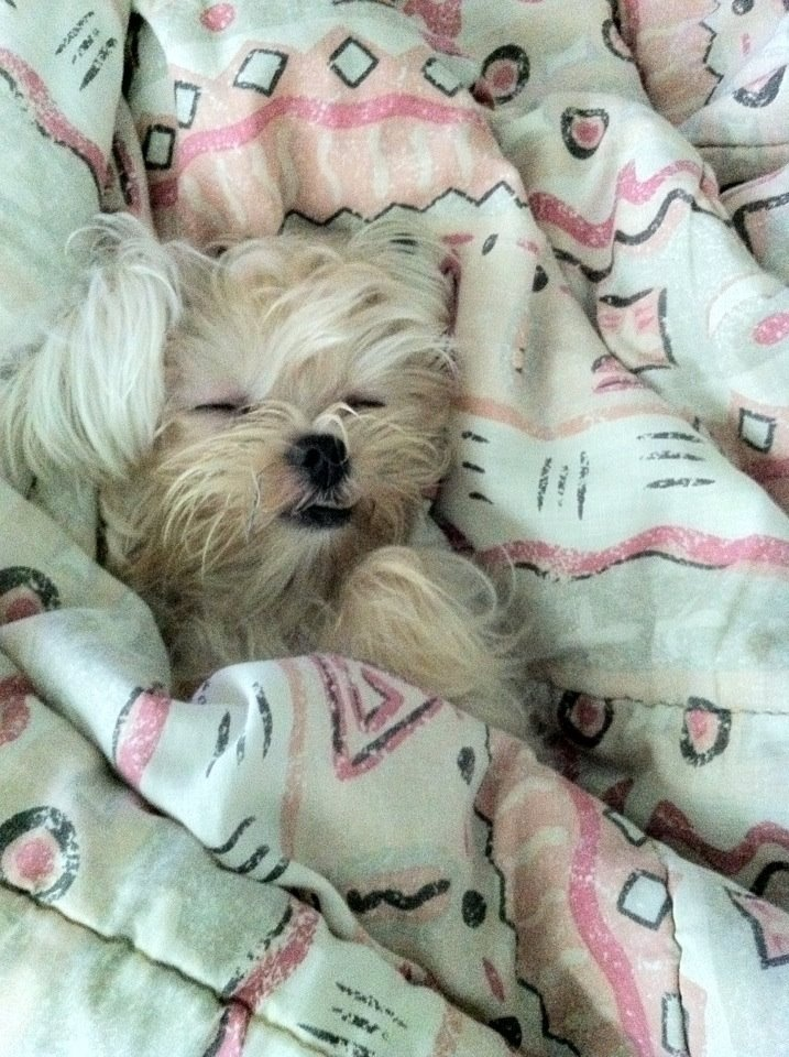 Little doggy also needs a blanket when he sleeps. :DNey, Doggie, Things, Blankets, Sleep, Adorable Pets