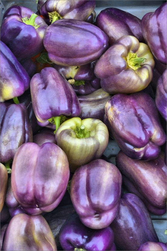 pretty purple bell peppers - one of 8 picks for this week's Friday Favorites